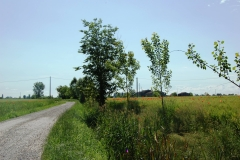 Verso-le-Attilie